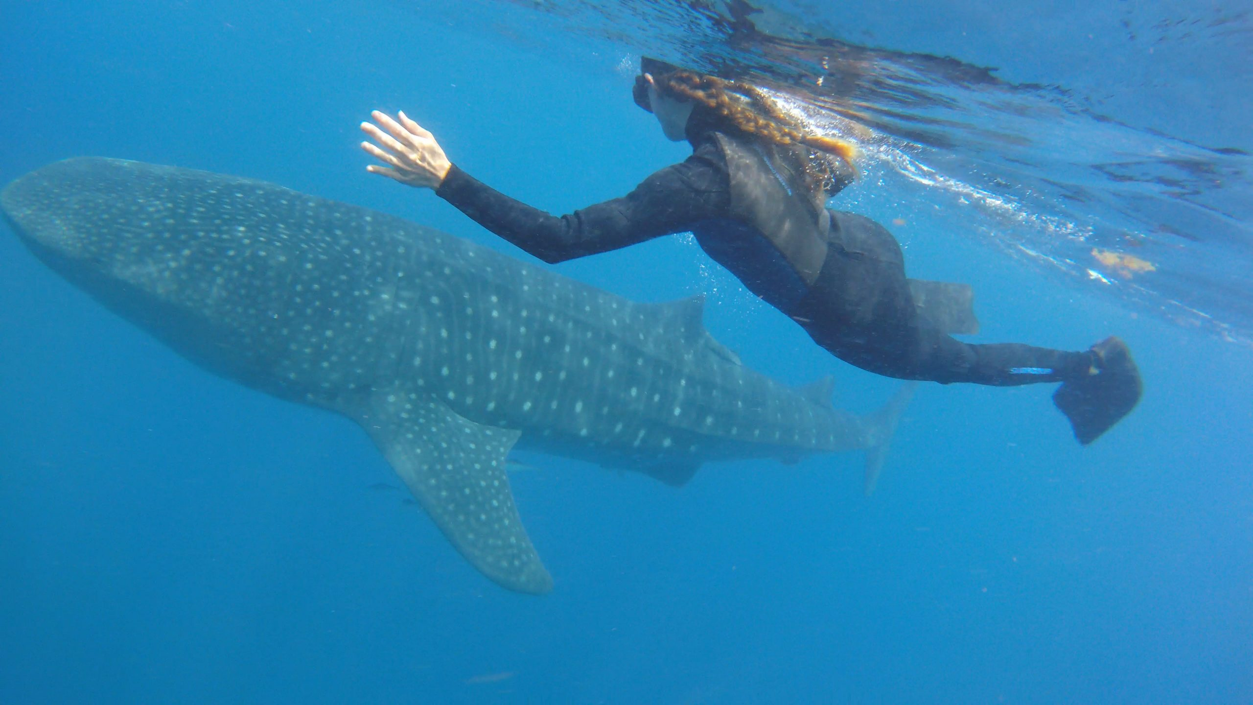 Diving with Sharks in Mexico
